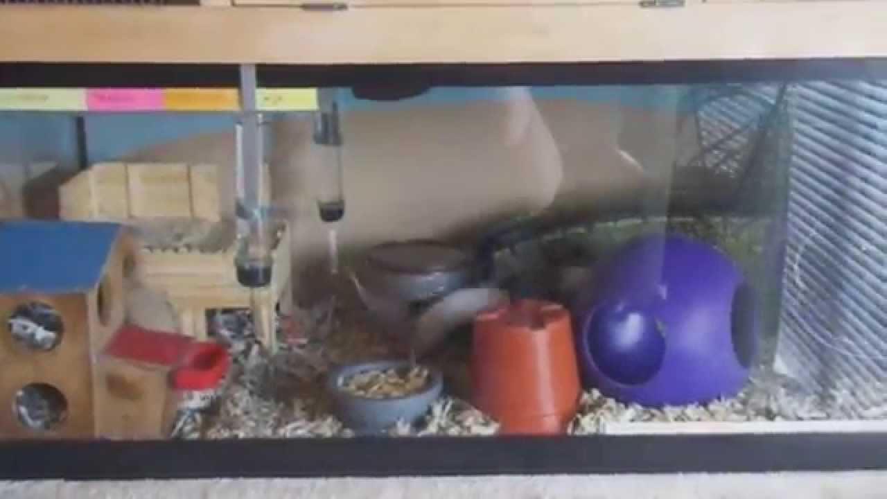 mouse cage set up 20gal long and diy topper youtube
