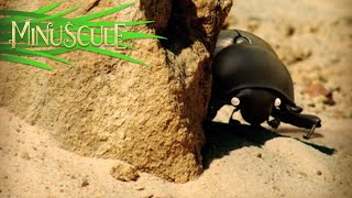 Minuscule - The Dung Beetle Battle / Bouse de là (Season 1)
