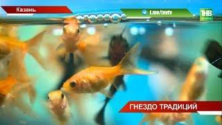 Птичий рынок в Казани может закрыться - ТНВ
