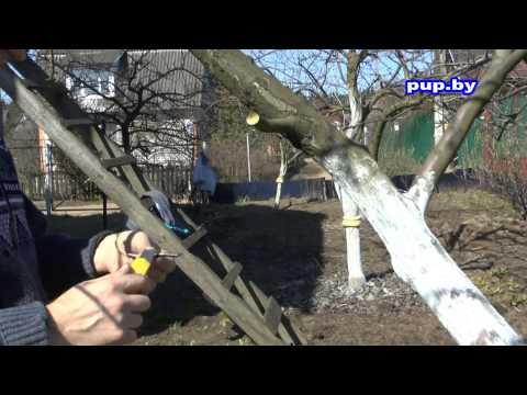 видео: Привить дерево, секрет 100% приживаемости plant a tree, a secret 100% survival
