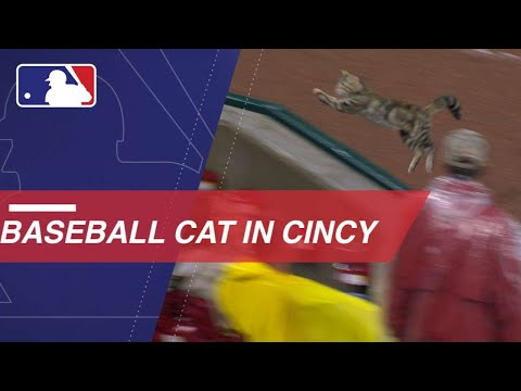 Cat runs through the field and the stands in Cincy