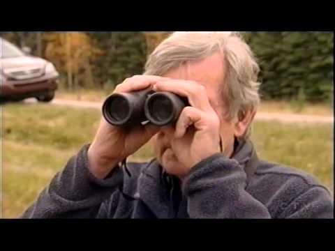 W5  Alberta Wild Horse Documentary 2015