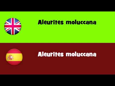 FROM ENGLISH TO SPANISH = Aleurites moluccana
