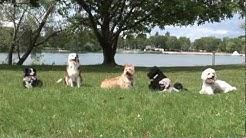 Hundezentrum Hamminkeln