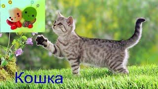 Как говорят животные. Звуки и голоса домашних животных. Обучающее видео для детей