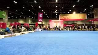 Mid Florida Golden Retriever Club Specialty - Benny Final Go Around