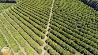Phassouri Orange and Grapefruit plantations in Limassol by Cyprus from Above and Oramatech