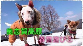 奥志賀高原 雪遊び2日目☆ 父ちゃんがスノボをしに、リフトに乗って行っ...