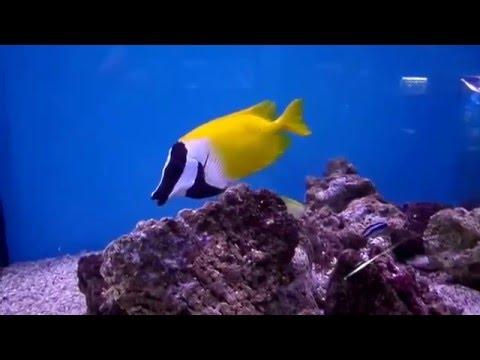 фото океана музей мирового калининграде в
