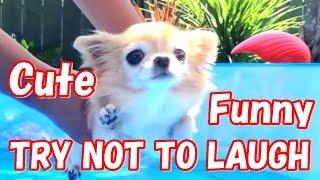 「笑える動画集」 絶対笑う、おもしろ犬、可愛いワンちゃん - Funny Dog...