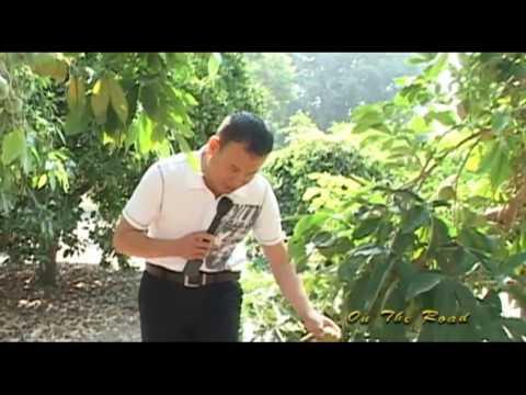 Fullerton Arboretum, Fullerton California - Part 1