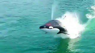 Yunus Balığı Şeklinde Deniz Aracı