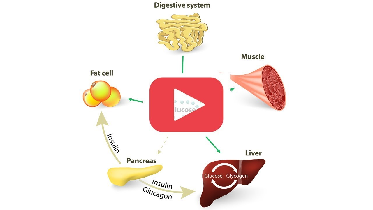 L'obesità ostacola la crescita muscolare