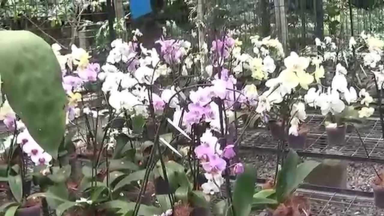 Orquideas de la exposicion del jardin botanico nacional de for Jardines de orquideas