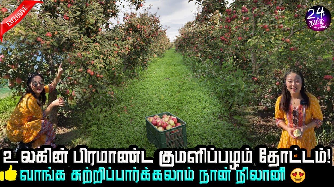 குமளிப்பழம் இவ்ளோ விலையா!🤑😍அருமை | world largest apple farm in CRI Tamil | CRI Nilani | cri tamil |