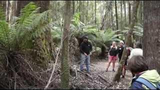 Tasmanien - Eine Rundreise