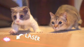 What Are Cats Like In Slow Motion?