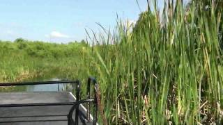 Florida Airboat Ride at Boggy Creek Airboat Rides