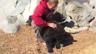 Black bear cubs hand fed - Yellowstone Bear World