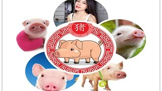 what your chinese zodiac sign says about you the pig zodiac   a special caroline