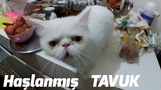 Kedi için ideal Yiyecekler - PamukluHayatlar