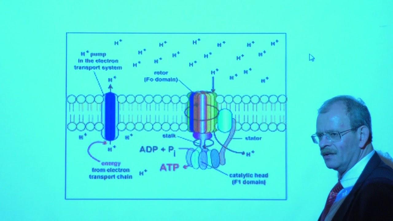 Гладилин А. К. - Биохимия - Электрон-транспортная цепь