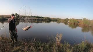 Рыбалка на ТОЛСТОЛОБА Удачная рыбалка Ловля толстолоба на поплавок Рыбалка 2021
