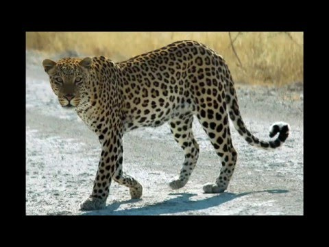 TOP 10 FASTEST CATS ON EARTH