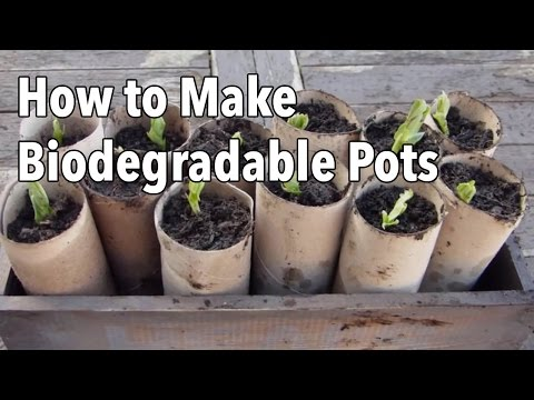 How to Make Biodegradable Plant Pots - Homemade Seed Starting Pots