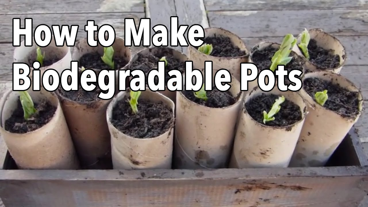 How To Make Biodegradable Plant Pots Homemade Seed