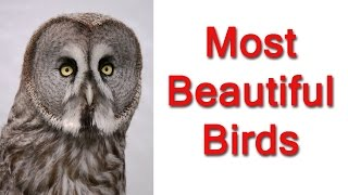 Top 10 Most Beautiful Birds - part:1 - Crazy Top 10 Lists