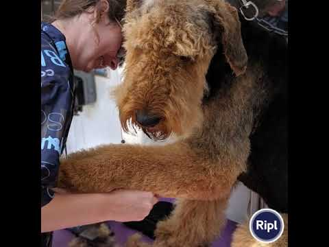 Dog and Bone Grooming 01267 282828