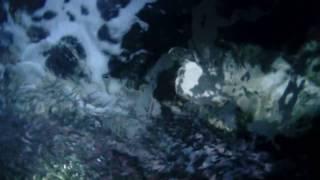 la réunion saint paul grotte aux langoustes cap lahoussaye