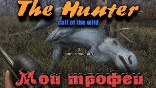МОИ ТРОФЕИ - TheHunter: Call of the Wild