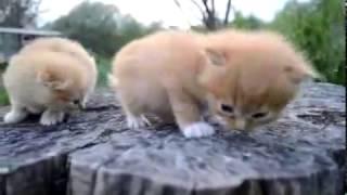 милые и смешные котята очень прикольные