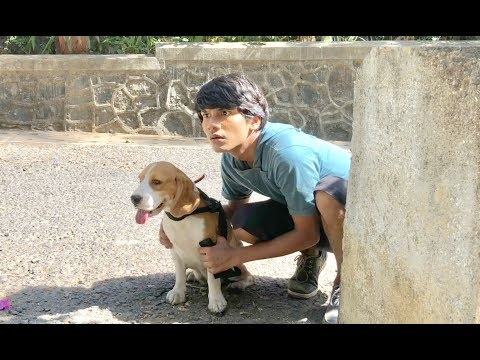 DOG SHORT FILM  | SECRET POCKET  || MOHAK MEET || SEEMA
