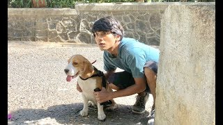 DOG SHORT FILM  | SECRET POCKET  || MOHAK MEET