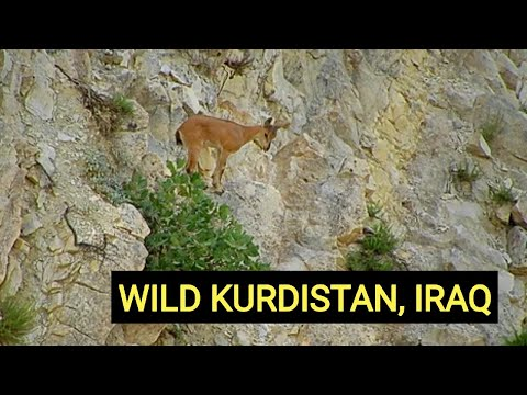 Wild Iraq 4K | Official Trailer