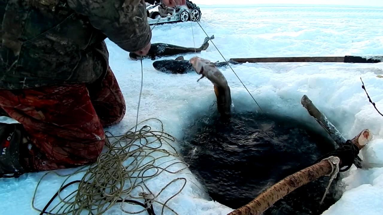 Магазины охоты и рыбалки в кургане