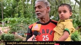 Kerala budget 2016; Coconut farmers in hope