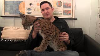 Jeff the Animal Guy Teaches You about the Siberian Lynx