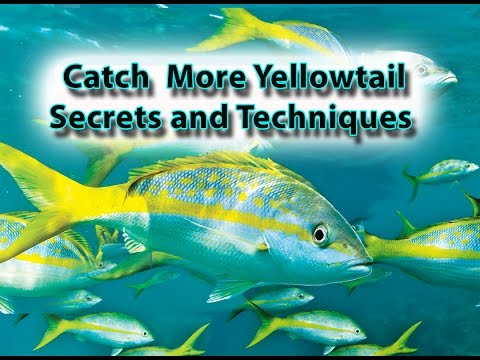 Yellowtail Snapper Fishing Secrets And Techniques