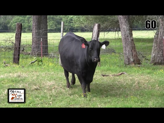 McCall Land and Cattle Lot 60