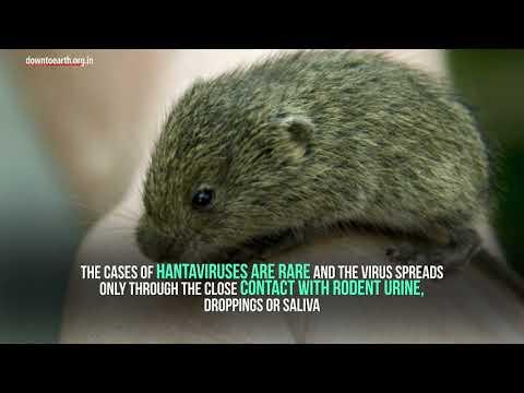 Hantavirus not as contagious as coronavirus