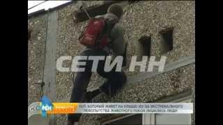 Спасение любознательного кота завело его хозяев на крышу девятиэтажки