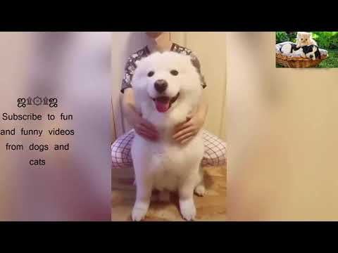 [Dog and Cat] cute cats and dogs playfully part 4