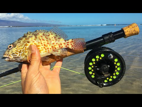 Fly Fishing Hawaii Reef Species | Maui PT 2