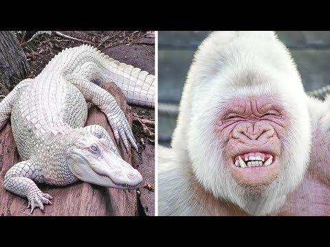 9 schönsten Albino-Tiere