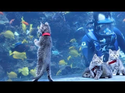 Kittens And Puppies Visit Aquarium