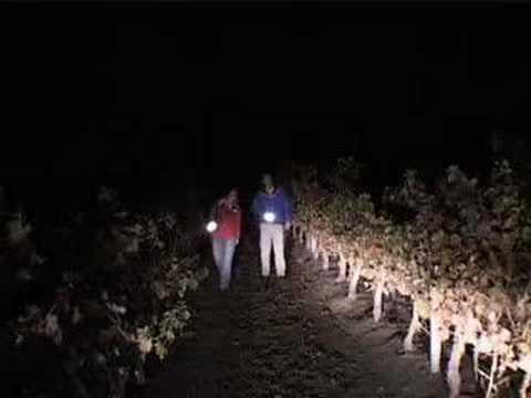 Episode 13 - 2007 Jordan Harvest Report